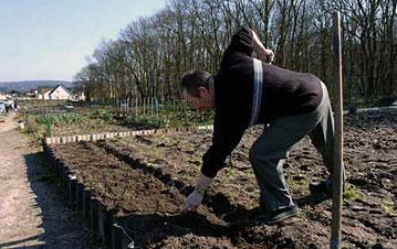 vue d'un jardin ouvrier : un jardiner trace ses sillons en vue de la plantation