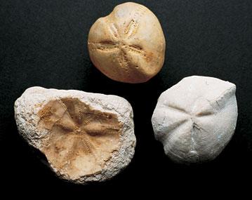 Outils néolithiques (2000 ans avant JC)